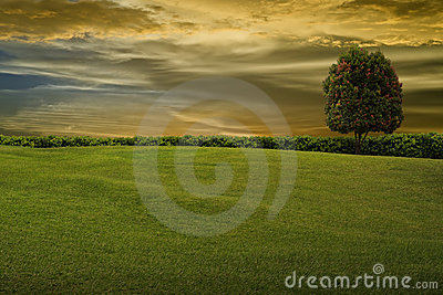 Grass and tree on evening sky