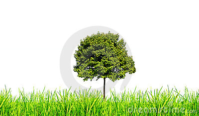 Grass and tree isolated
