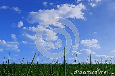 Grass under cloudy sky