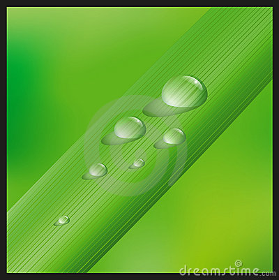 Grass with waterdrops