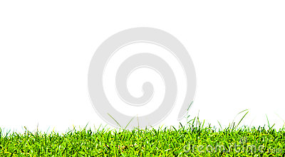 Grass on white background.