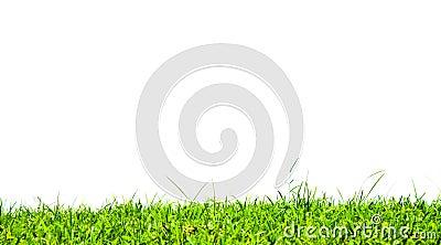 Grass on white background.