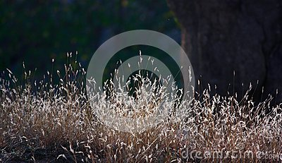 Grass in winter sun