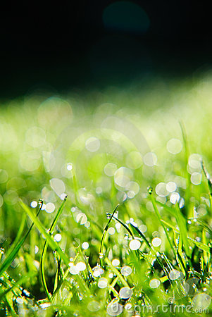 Free Grass With Dew Drops Royalty Free Stock Images - 6465299