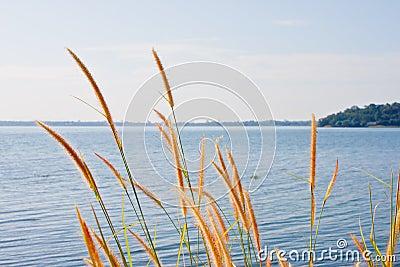 Grasses and lake