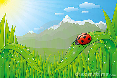 Grassfield landscape with ladybug