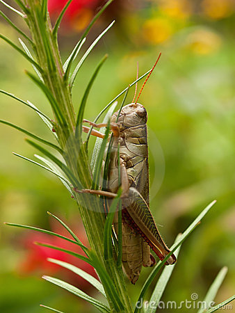 Grasshopper κατακόρυφος