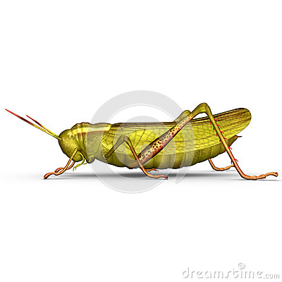 Free Grasshopper Royalty Free Stock Images - 48759579
