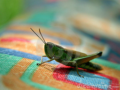 Grasshopper on coloured texture Stock Photo