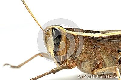 Grasshopper face macro