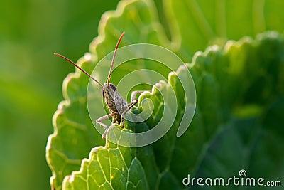 Grasshopper on guard