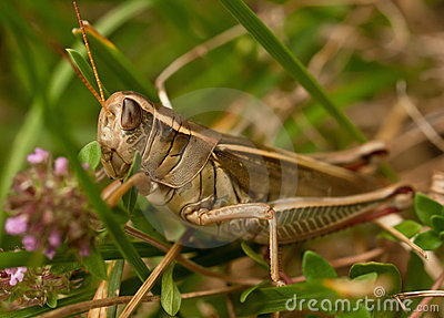 Grasshopper, horizontal