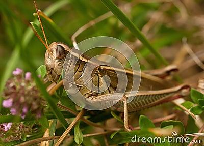 Grasshopper, horizontal