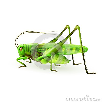 Free Grasshopper Realistic Isolated Stock Image - 46459231