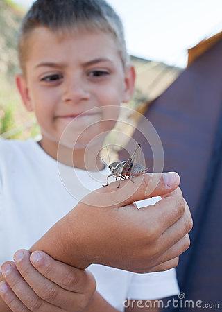 Grasshopper sits on  boy s arm