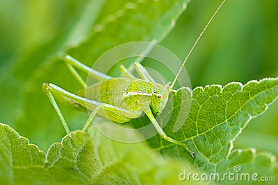 The grasshopper sitting in the grass