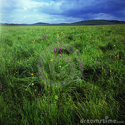 Free Grassland Royalty Free Stock Photography - 6206677