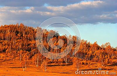 Grassland  in  Autumn