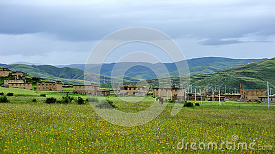 Grassland and flower under cloudy sky