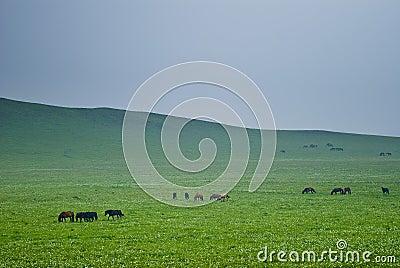 The grassland scenery