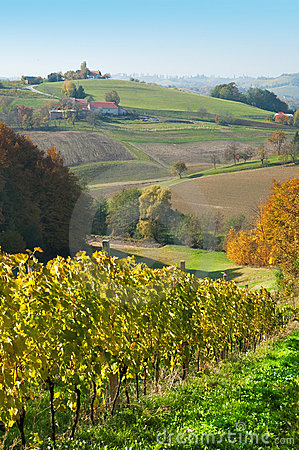 Grasslands hills and wineyards at Robaje - Croatia