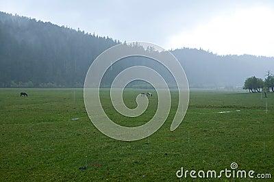 Grasslands in the rain