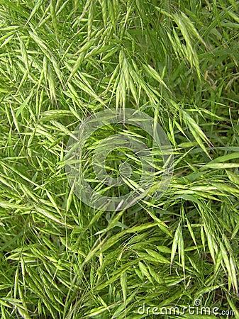 GrassTexture001