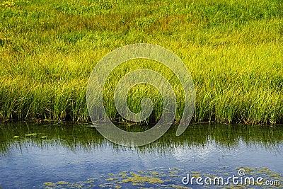 Grassy Freshwater Marsh