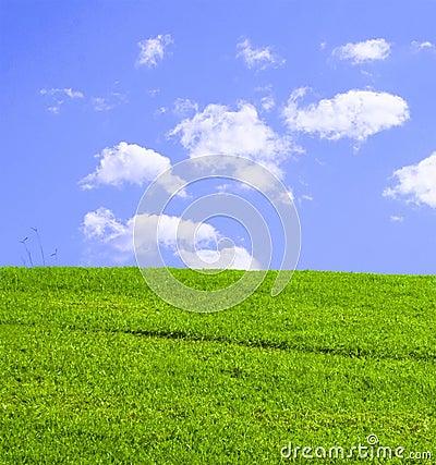 Grassy Green Hill