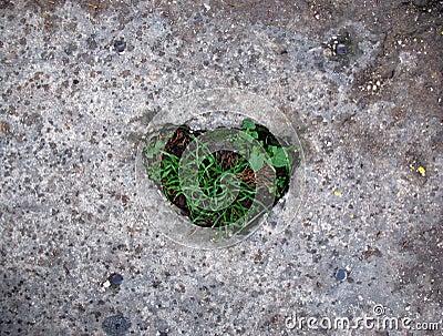 Grassy Heart