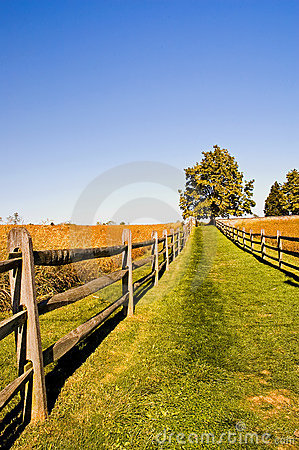 Grassy Lane on a Fall Afternoon
