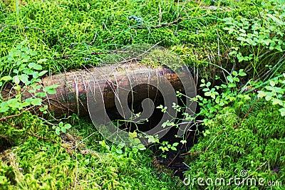 Grassy log
