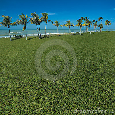 Grassy ocean view