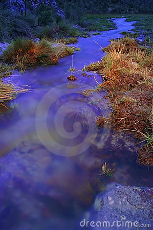 Free Grassy Riverbank At Dusk Stock Images - 2907114