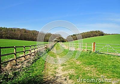 Grassy Track between fields