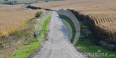 Gravel farm road between two corn fields ready for harvesting