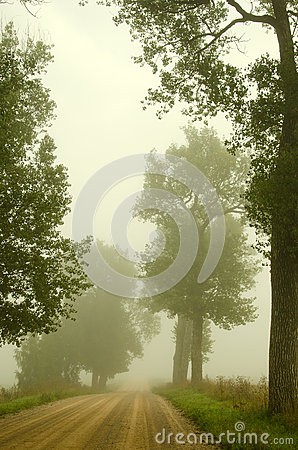 Gravel road old trees drown in morning fog