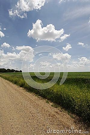Gravel Road recedes to horizon -rural farming area