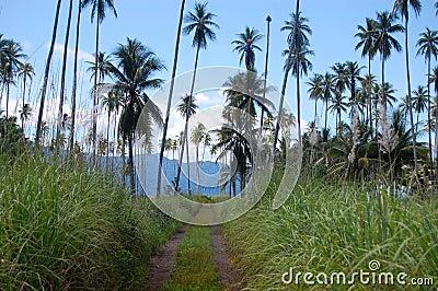 Gravel road at tropics