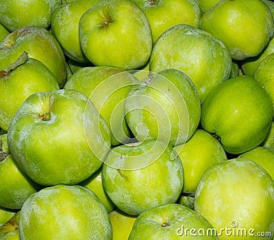 Gravenstein apples on display