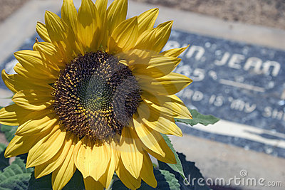 Graveside-Blume