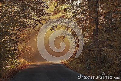 Gray Asphalt Road In Between Brown Orange Leaf Trees During Daytime Free Public Domain Cc0 Image
