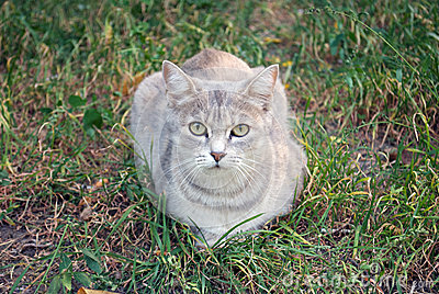 gray cat on the autumn grass