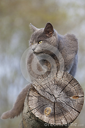 Gray cat on a log