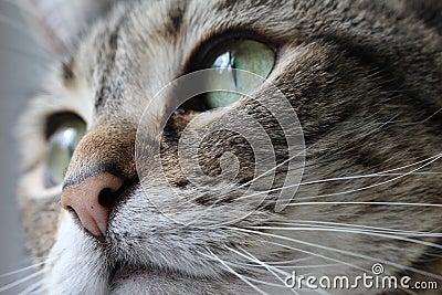 Gray Cat Macro