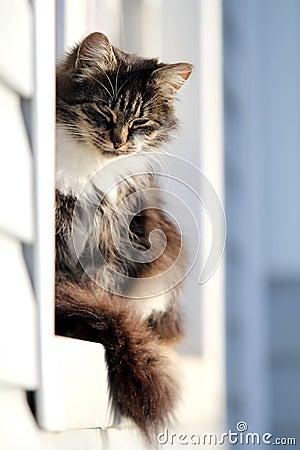 Gray cat in window