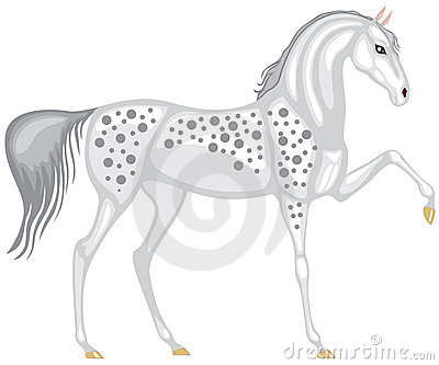 The gray in the dappled horse