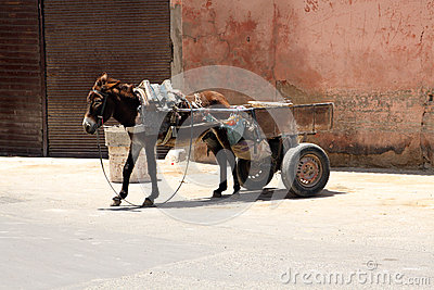 Gray donkey with a cart