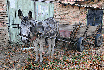 Gray Donkey and Empty Cart