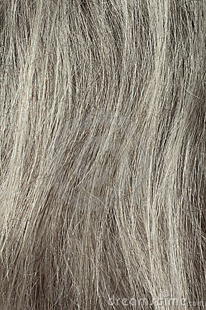 Gray Hair Closeup